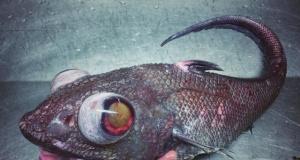 Varlığından haberdar olmadığımız ürpertici deniz canlıları