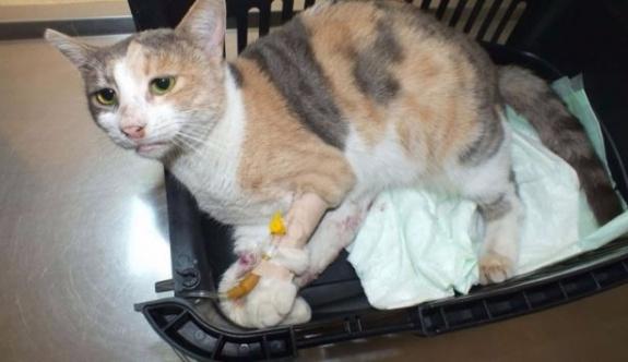 Marmaris'te sokak kedisine tecavüz edildi!