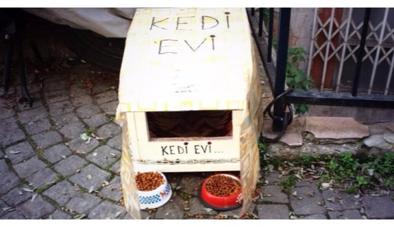 Kadıköy'de bir Psikolog,'' Kedi evi yapmak istediği için öldürüldü''!