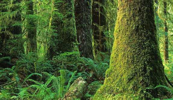 Brezilya 348 bin hektar yağmur ormanı arazisini madencilik ve tarıma açacak