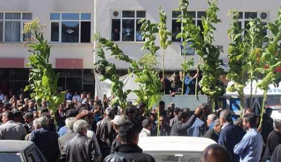 Yüzlerce tütün emekçisine polis saldırısı
