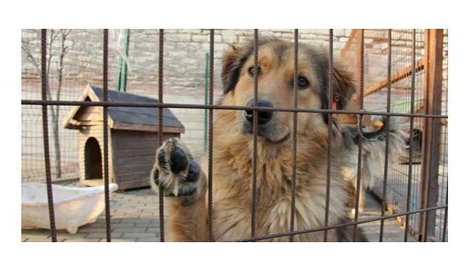 Sokak hayvanlarına işkenceye hapis geliyor
