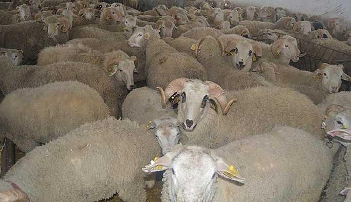 Bakan Fakıbaba: Köyüne dönene 300 koyun verilecek