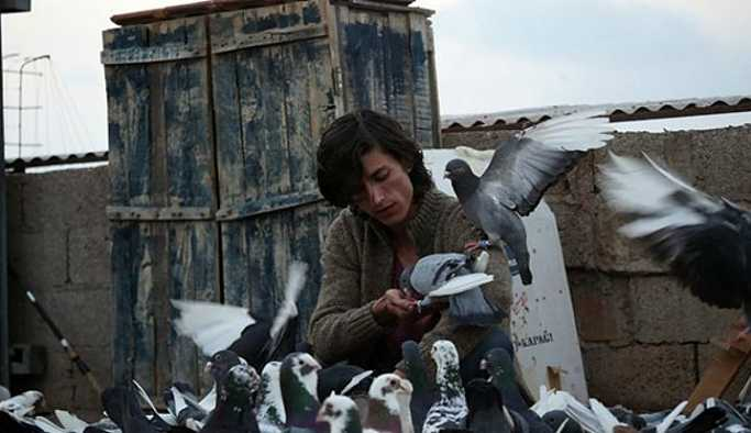 Güvercin Berlin yolunda