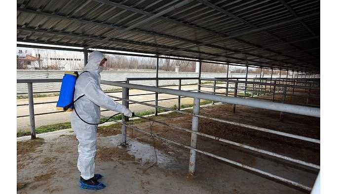 Şap hastalığı nedeniyle Bolu ve Kars'ta alarm verildi.