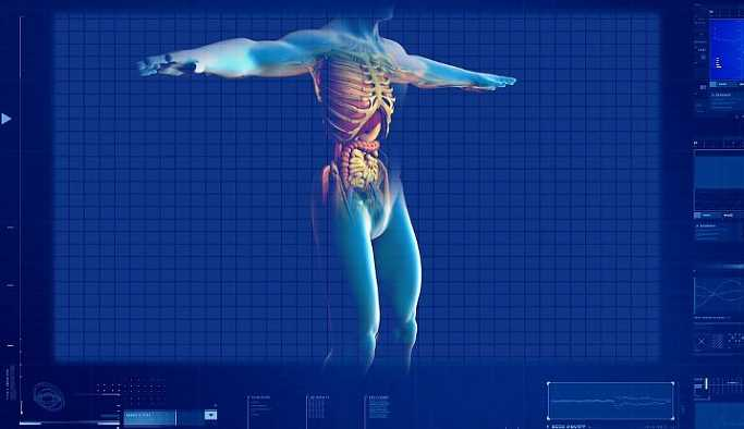 İnsanda yeni bir organ bulundu!