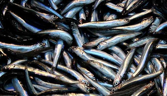 Balık yemek Parkinson'u önlüyor
