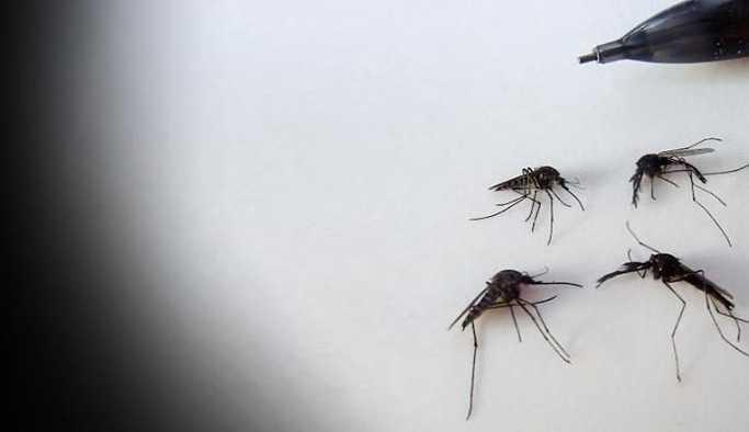 Cezaevi yönetimi sinekten örgüt çıkardı