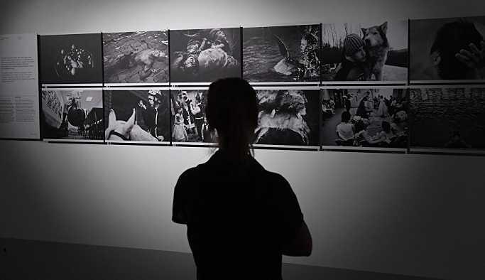 2018 Andrey Stenin Fotoğraf Yarışması'nın finalistleri belli oldu