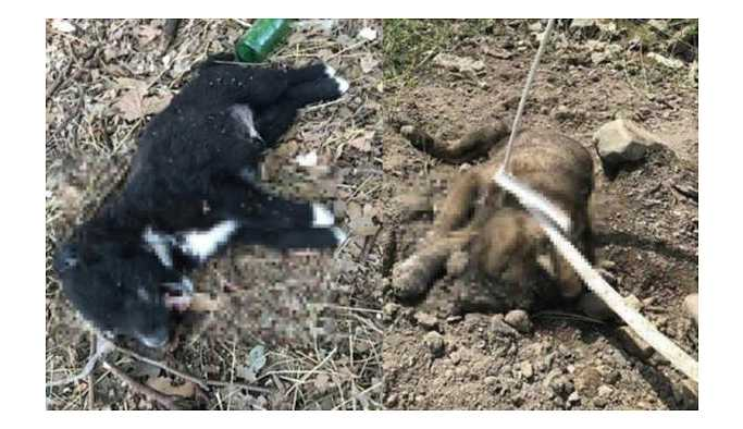 Manisa'da yavru köpekler vahşice öldürüldü