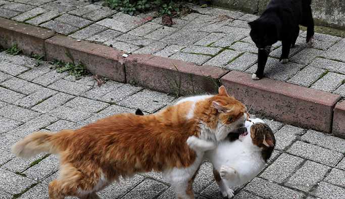 CHP'den sokak hayvanları için kanun teklifi