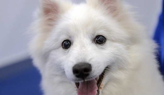 Kilo vermenin sırrı köpeklerde olabilir