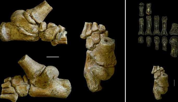 3 milyon yıllık fosil insan evrimine yeni bir boyut kazandırdı