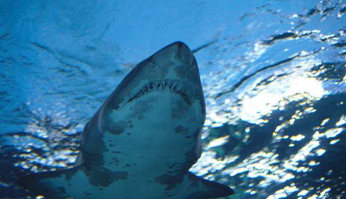 Genç kadın poz verirken köpekbalığı kolunu ısırdı: 'Vahşi hayvanlar, kontrol edilemez bir durum'