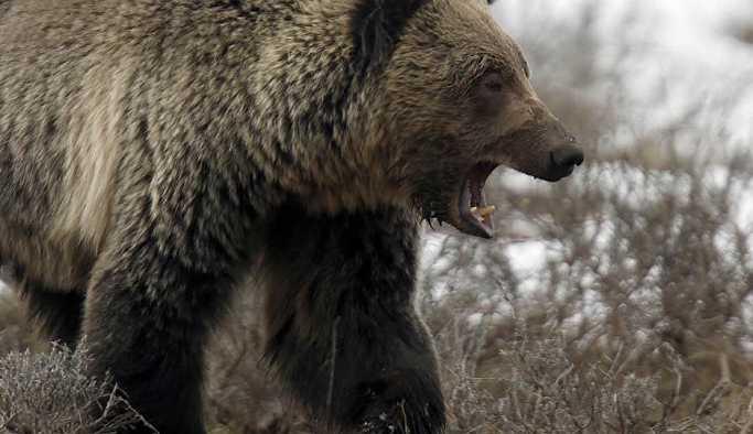 Ormanda gördüğü ayıya 'Gel oğlum buraya' dedi