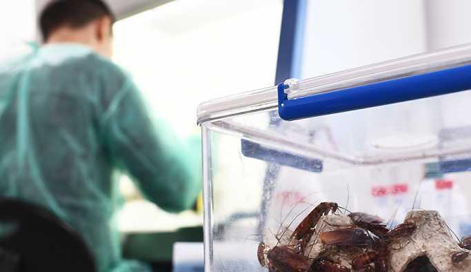 Rus bilim insanları, uzaydan dönen bazı bakterilerin daha da saldırganlaştığını tespit etti
