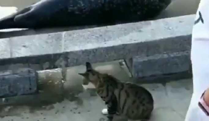 'Bu bir saldırı': Kedi, yolunu kapatan foku tokatladı