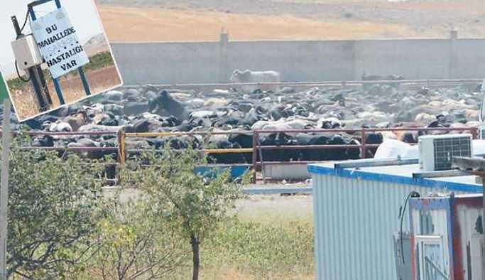 Et skandalı büyüyor: Et ve Süt Kurumu iddiayı doğruladı