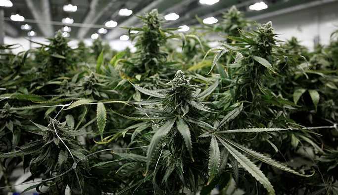 Şizofreni yatkınlığı marihuana içmeyi tetikliyor olabilir