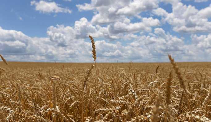Toprak Mahsülleri Ofisi, buğday ithal edecek