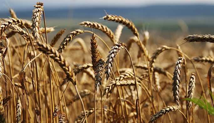 'Türk Lirası'ndaki düşüş Rusya'dan Türkiye'ye tahıl ihracatını etkilemedi'