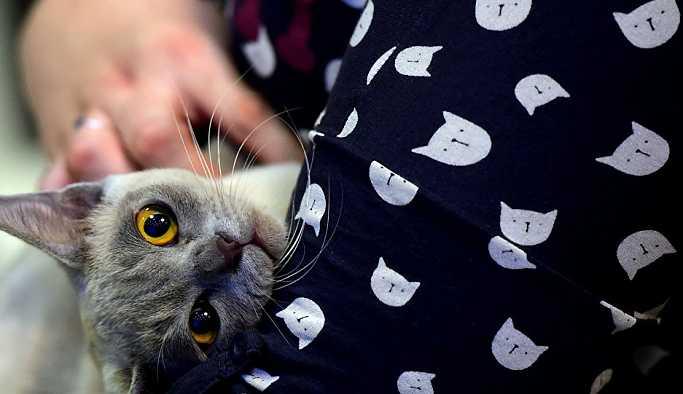 Vali yardımcılarının kedi tartışması mahkemeye taşındı