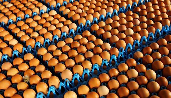 'Şu anda yumurtada arz açığı da fazlası da yok'