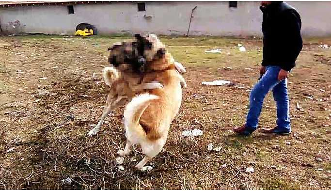 Köpeğin parçalandığı görüntüye gözaltı