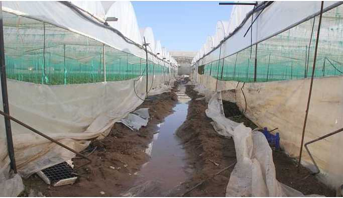 Mersin'deki yağışlar seracıları vurdu