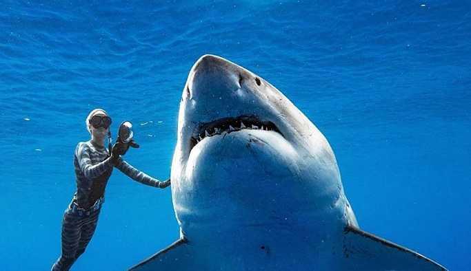 Dünyanın en iri büyük beyaz köpekbalığıyla yüzdüler