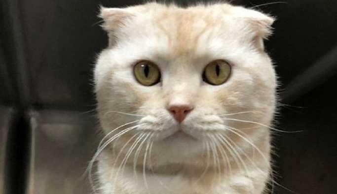 Tayvan'da kutuya koyduğu kedisini barınağa postalayan kişiye 90 bin dolar ceza