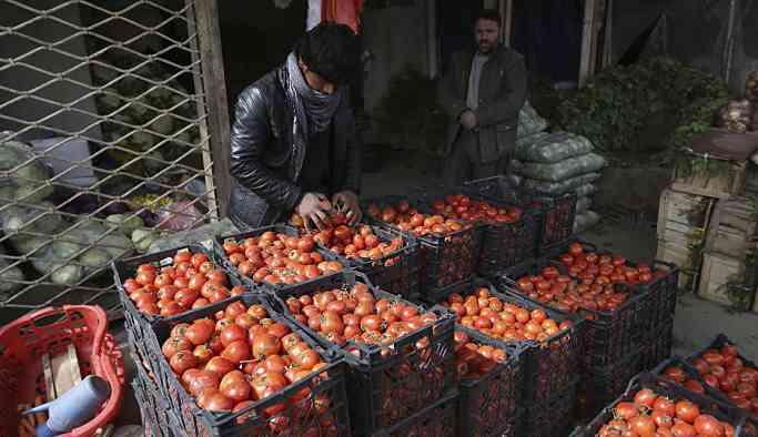 Tanzim satış için ürün alımına başlandı: Kâr yok, yalnızca nakliye maliyeti