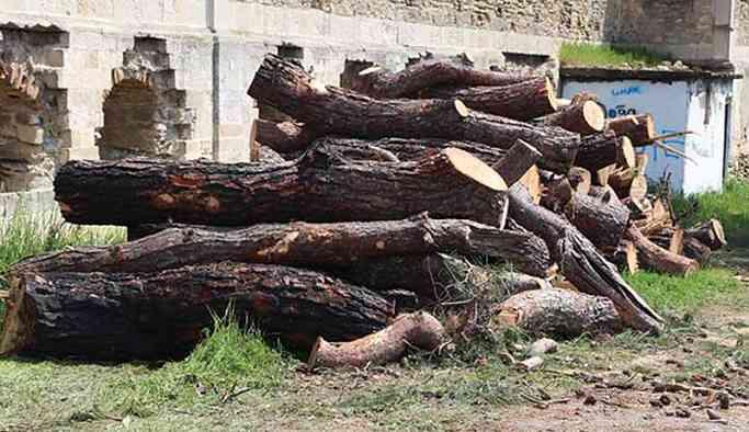 Turizm Bakanlığı'na devredilen arazide ağaç katliamı