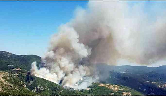 Orman yangınlarına karşı toplanan imzalar HDP'de