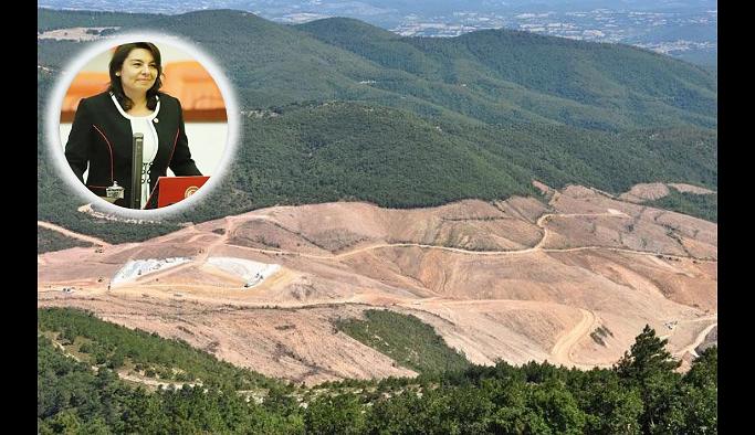 AKP'li vekil 'rahatlattı': Bugün bin 800 noktada ağaç kesiliyor, her şey kontrol altında!