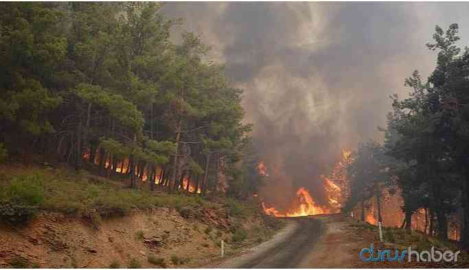 Bu yıl 5 bin 469 hektarlık ormanlık alan zarar gördü