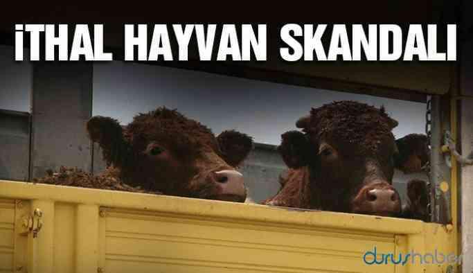 İthal hayvan skandalı