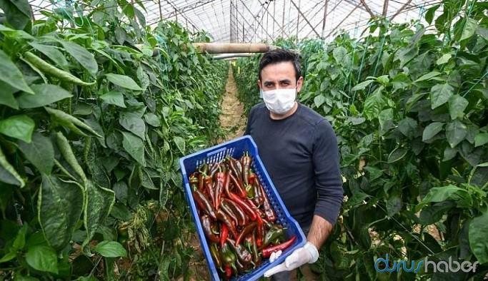 İBB çiftçinin satamadığı ürünü alacak