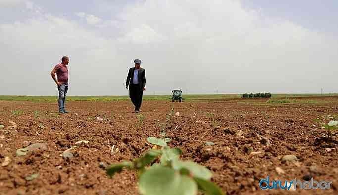 HDP'li belediye boş arazisini yoksullar için ekecek