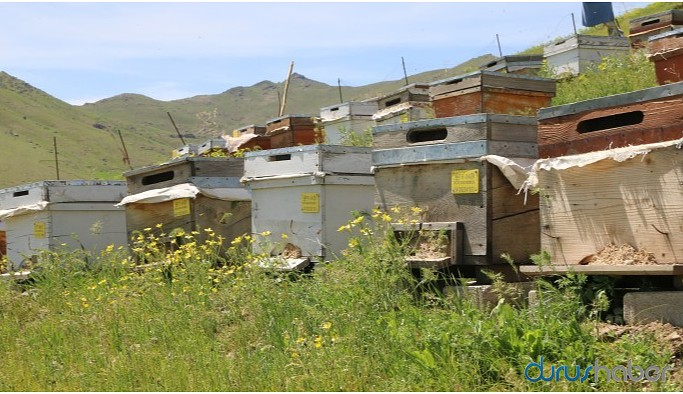 Arılar oğul vermeye başladı