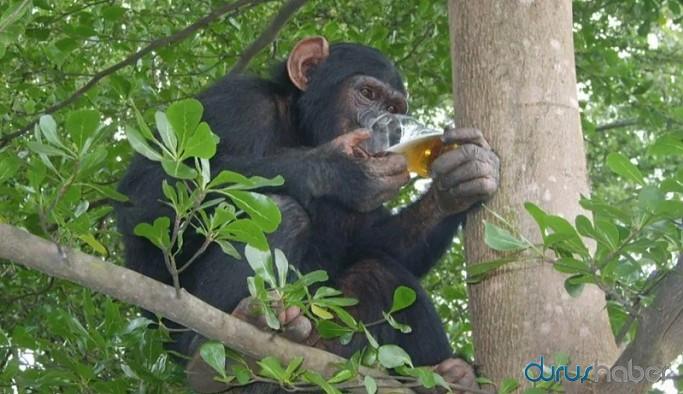 1 kişiyi öldürüp 250 kişiyi yaralayan 'alkolik maymun'a müebbet hapis