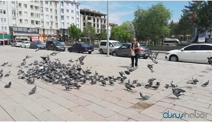 Kars Belediyesi sokak köpekleri için aşevi açtı