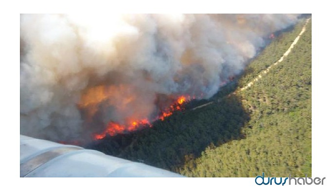 Çanakkale'de orman yangını: 300 hektar yandı