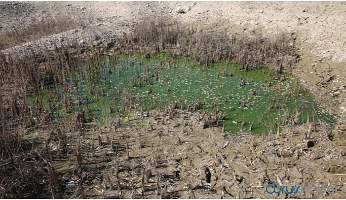 Hasankeyf'i sular altında bırakan Ilısu Barajı'nda sular çekildi, balıklar öldü