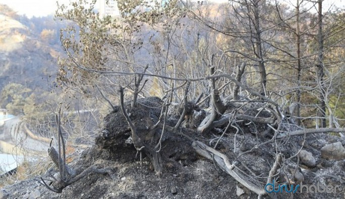 Hatay'daki orman yangını 33 saat sonra söndürüldü