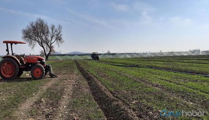 Buğdayda kuraklık tehdidi: Sulama sistemi kiralamak zorunda kalan üretici zor günler geçiriyor