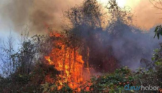 Doğu Karadeniz yanıyor: Dört ilde 23 noktada yangın