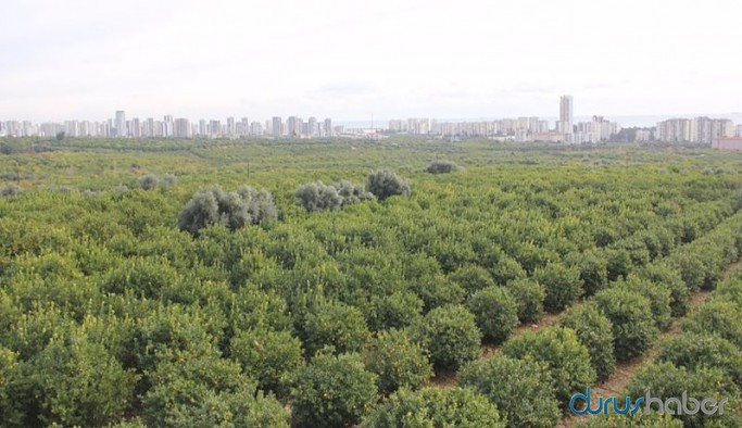 Sanayi sitesi için 60 bin ağaç katliamı: 'Ranta açılıyor' diyen arazi sahipleri tepkili