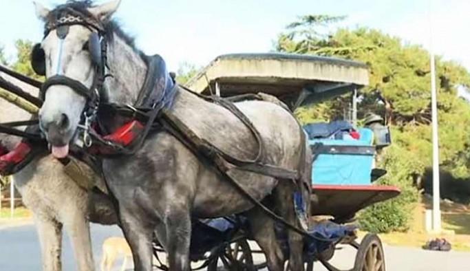 İBB'nin Adalar'dan alıp MHP'li belediyeye hibe ettiği atlar kayıp
