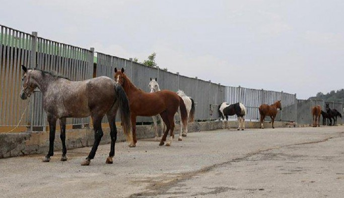 Kayıp atlar Irak'a satıldı